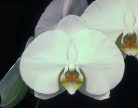 Какие орхидеи бывают фото
