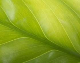Какие особенности строения растительной клетки фото