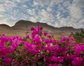Какие растения растут в пустыне фото