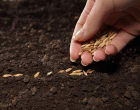 Какие семена считаются капризными фото
