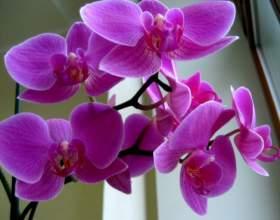 Какие существуют покрытосеменные растения фото