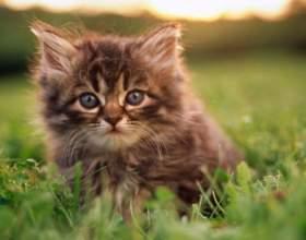 Какие существуют популярные кошачьи имена фото