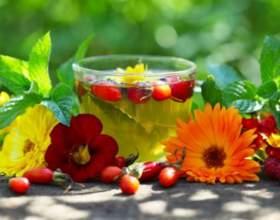 Какие травы можно пить вместо чая фото