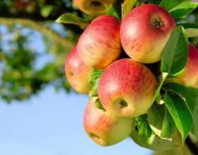 Какие витамины содержатся в яблоке фото