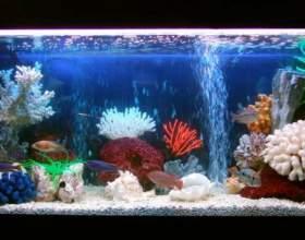Каких рыб можно держать фото