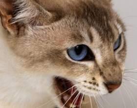 Какими болезнями можно заразиться от кошек фото