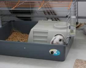 Какими должны быть клетки для декоративных кроликов фото