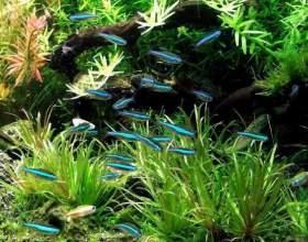 Какое количество рыбок должно жить в 30-ти литровом аквариуме фото