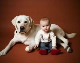 Какое животное завести для ребенка с дцп фото
