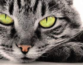 Что видит кошка в темноте фото