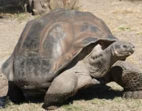 Какого размера могут быть черепахи фото