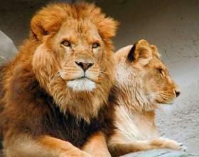 Какой дом у львов фото
