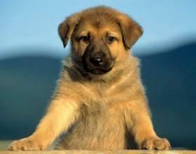 Какой пес лучше всех фото