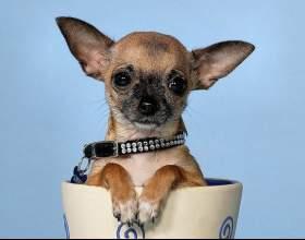 Какую породу собаки выбрать для квартиры фото