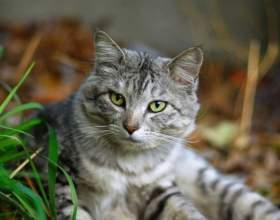 Кастрация кота: плюсы и минусы фото