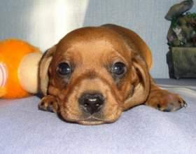 Кличка для собаки-кобеля: какую выбрать фото