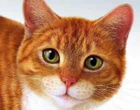 Когда делать кошке стерилизацию фото