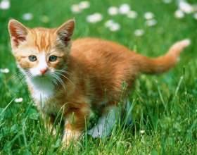 Когда делать первые прививки котенку фото