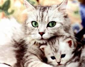 Когда стерилизовать кошку фото