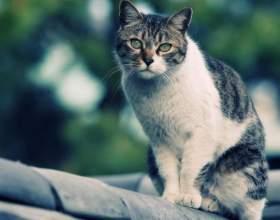 Кошка плохо ест: возможные причины фото
