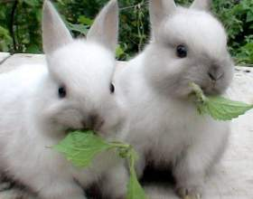 Кролики: разведение, выращивание, кормление, уход фото
