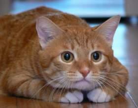 Можно ли отличить кота от кошки по морде фото