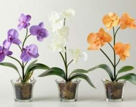 Можно ли поливать орхидею водой из-под крана фото