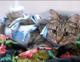 Можно ли стерилизовать не рожавшую кошку фото