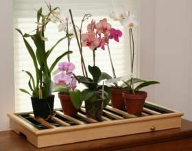 Можно ли вырастить орхидею в домашних условиях фото