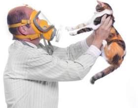 Можно ли заводить кошку, если есть аллергия на пыль фото