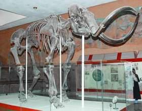 Необычные музеи москвы фото