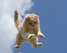 Несколько интересных фактов о кошках фото