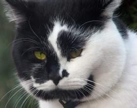 В каком возрасте лучше кастрировать кота фото