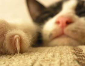 Нужно ли стричь когти кошке фото