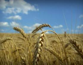 Организация фермерского хозяйства фото