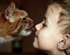 От каких болезней лечат кошки фото