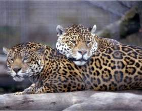 Отдыхаем с детьми: выходные в зоопарке фото
