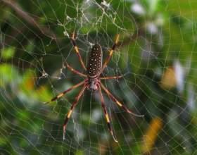 Откуда берутся зимой пауки фото