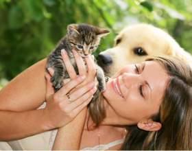 Передаются ли кошачьи болезни человеку фото