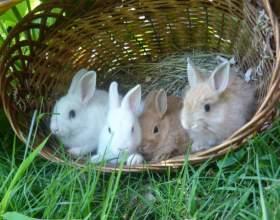 Питание декоративных кроликов фото