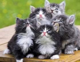 Почему кошка бросает котят фото