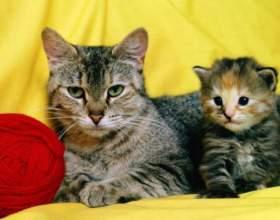Почему кошка не кормит котенка фото