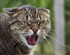 Почему кошка проявляет агрессию фото