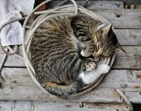 Почему кошки любят спать фото