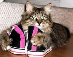 Почему кошки любят валерьянку фото