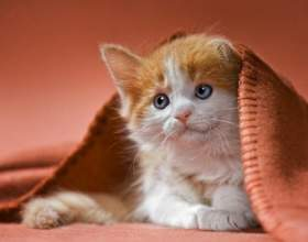 Почему котенок чешет уши и трясет головой фото