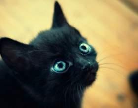 Почему глаза котенка меняют цвет фото