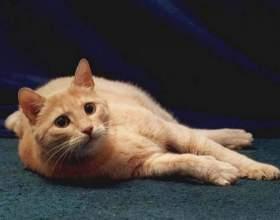 Почему коты гадят дома фото