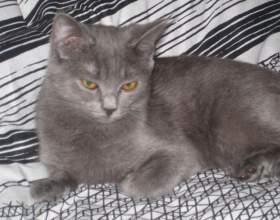 Почему кошки «топчут» передними лапками фото