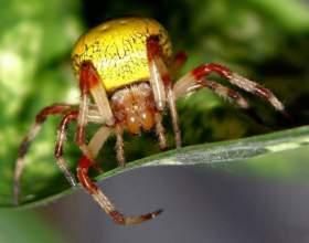 Почему нельзя убивать пауков фото